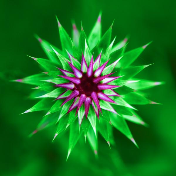 "ETC-3167  ""Flower Starburst in Color"""