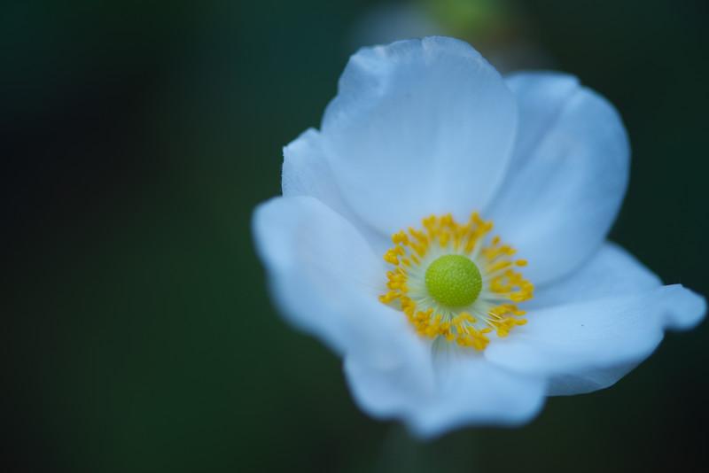 ETC2514  Delicate Flower  sf DSC_9232