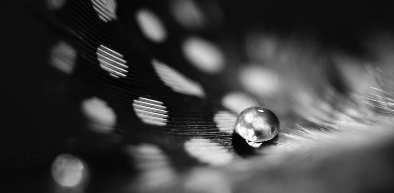 "ETC-3193  ""Droplet on Feather in Black and White"""