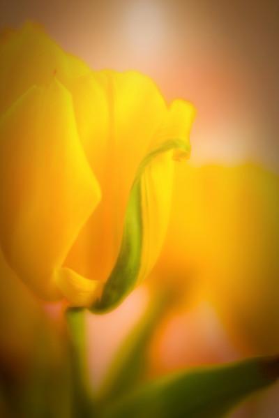"ETC-3490 ""Yellow Dream ""  Med file_4074"