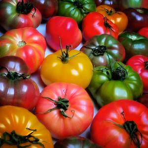 ETC2023  Tomatoes       IMG_5754