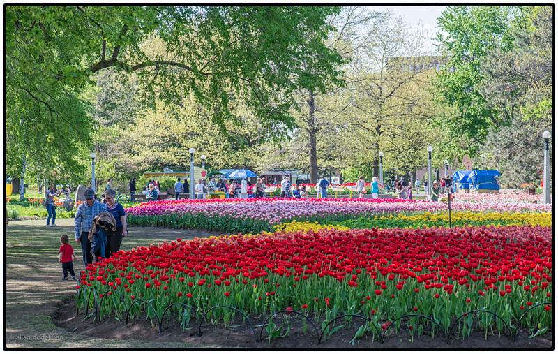 Tulip Festival Ottawa