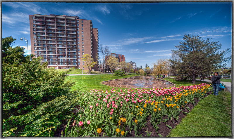 Glebe Pond During Tulip Festival