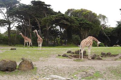 2016 - SF Zoo