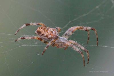 DSC_3257cropweb