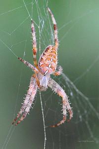 CC3_1643cropweb