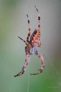 CC3_1642cropweb