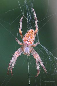 CC3_1644cropweb
