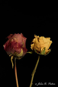 Dried red and yellow roses.