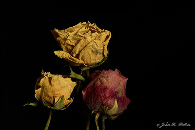 Dried yellow and red roses.