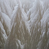 Ice crystals 1