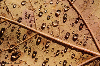 Rain drops on fallen leaf