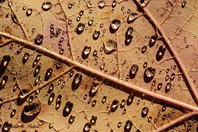 Rain drops on fallen leaf