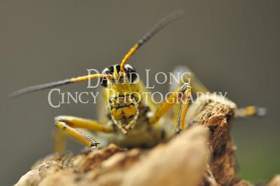 Close Up Macro Photos of Animals