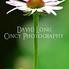 Close up photos by Cincinnati photographer David Long - CincyPhotography