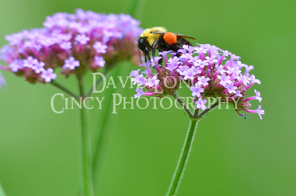Close Up Macro Photography