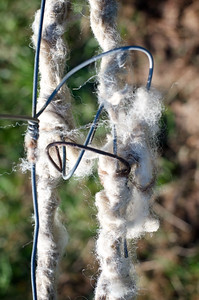 Wool On The Fence