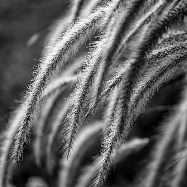 Fuzzy Tails