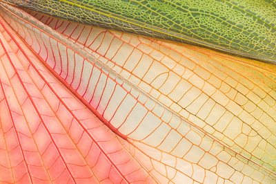 Grasshopper wing, close up
