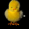 Little Yellow Chick Windup Toy