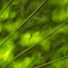 Closeup of Green Leaf, Fairchild Tropical Botanical Garden, Coral Gables, Florida
