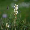 Wildflowers, Banff National Park, Alberta, Canada