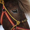 Closeup of Horse near Tromso, Norway