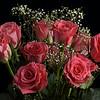 Pink Roses Still Life
