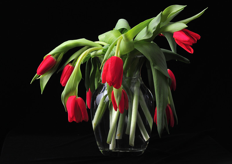 Droopy Tulips