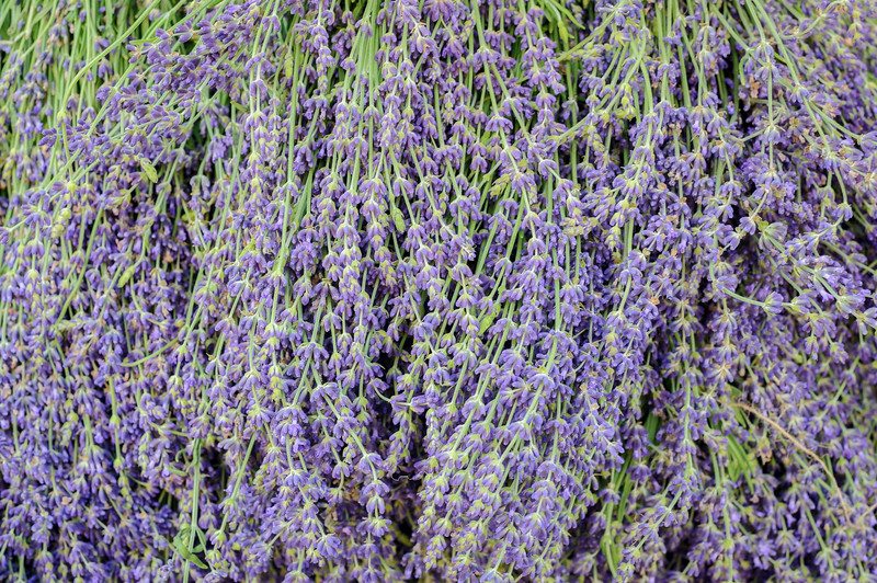 Lavender bunches at the Union Square Farmer's Market, New York City