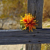 Flower on Wooden Cross, Texas