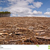 //www.dreamstime.com/stock-photo-clearcut-logging-image14376690