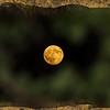 Harvest Moon Sept-2016