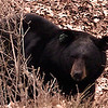 bear 55 across the street