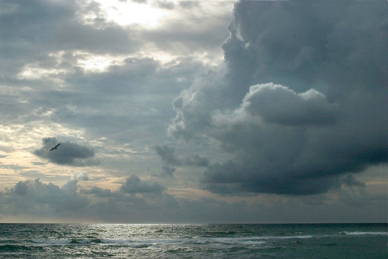 Warm Waters Of Caspteron, Venice, Florida.<br /> August,2008
