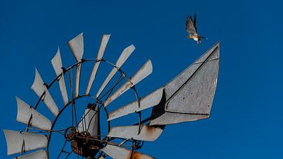 20200107_Barker church, hawk, windmill, moon_0106 16 x 9