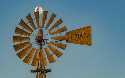 Mockingbird on windmill at JSC CRV_1295