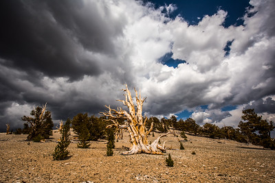 Ancient Bristlecone Pine Forest Bishop Lone Pine California 45Epic Dr. Elliot McGucken Fine Landscape and Nature Photography