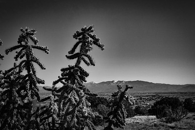 Sangre de Christo Range and Cholla Cactus