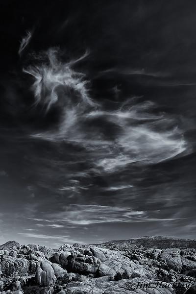 Cloud Creature
