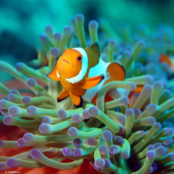 Nemo Alone