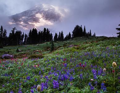 35 Mt Ranier Morning