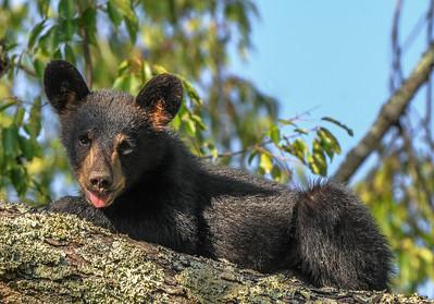 6 Bear Cub