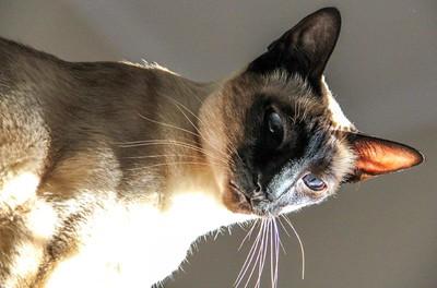 9 Cat Stalking