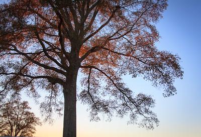 Last Glimmer of Autumn