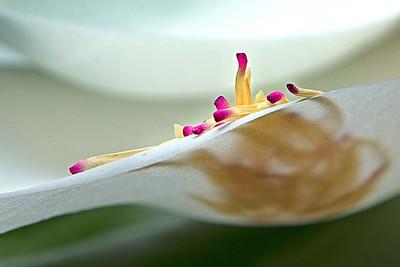 Magnolia Matches