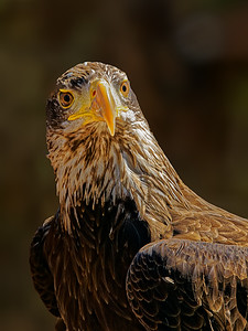 Young Bald Eagle by Gary Emord - Judge's Selection 2017-2018