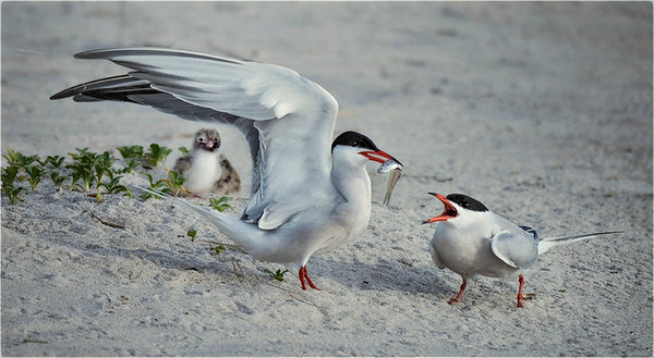 Taking Terns by Anastasia Tompkins - Judge's Selection 2017-2018