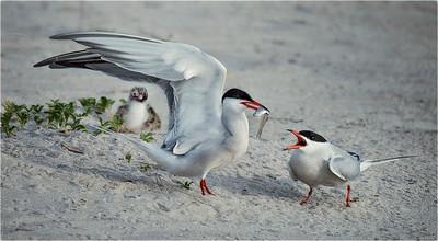 18. Taking Terns