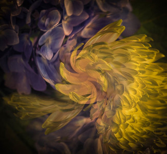 Flowers Swirling by Lane Lewis - Judge's Selection 2018-2019
